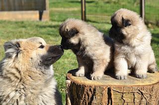 Choosing A Responsible Breeder