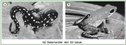 Klasifikasi Jenis Vertebrata Dan Contoh Hewan Vertebrata