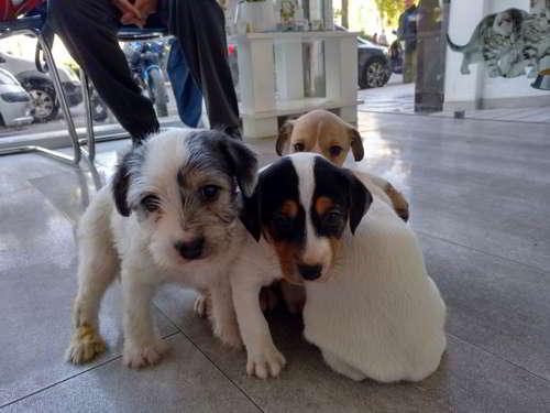 cachorros talla mediana