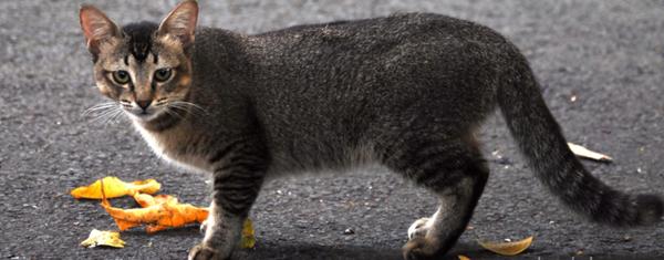 Program Tangkap Kucing Liar Dikecam, Inilah Komen 'Pedas' Netizen Bikin Panas!
