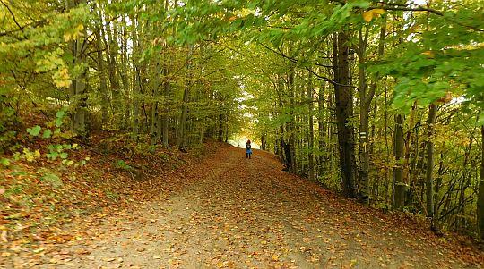 Przez niewielki młody las.