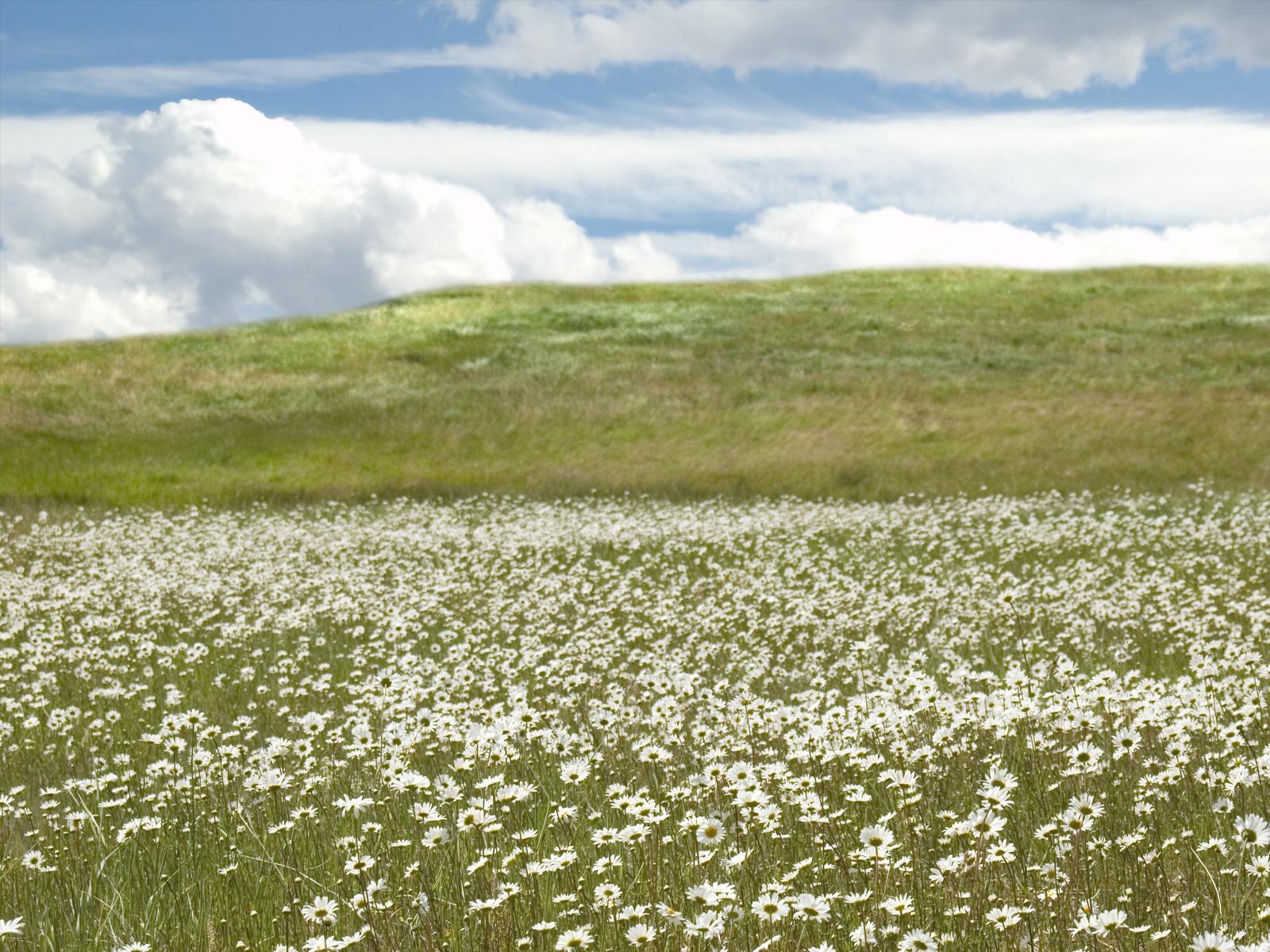 Wallpaper: Hd Wallpaper Meadow