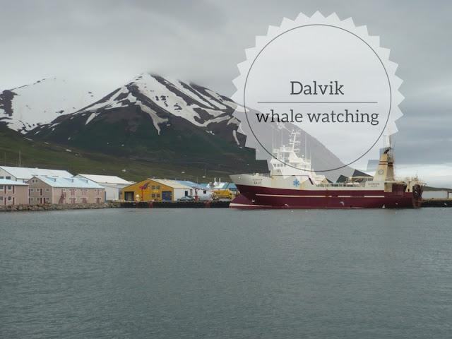 Whale Watching in Islanda a Dalvík. il porto di Dalvik