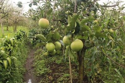 Wisata Petik Apel, Kebun Bunga Sidomulyo Malang