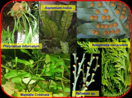 Gambar Macam Macam Tumbuhan Lumut Suksesi Pengertian Suksesi Jenis Suksesi Macam Suksesi Kelompok 2 Biology Eksperimen Pengamatan Sporapolen Tumbuhan Berbiji