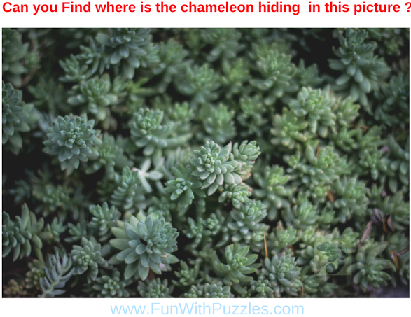 Picture Puzzle to Find Hidden Chameleon