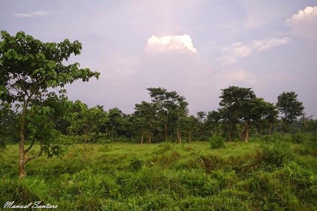 Sauraha, centro di allevamento elefanti
