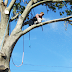 How to find The Right Tree Removal Specialist