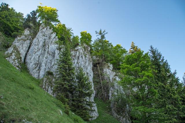 Schober und Frauenkopf  Wanderung Fuschl am See  Wandern FuschlseeRegion Salzkammergut 04