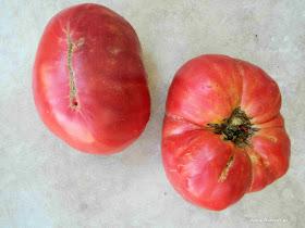 ντομάτα Σαλμονίκο