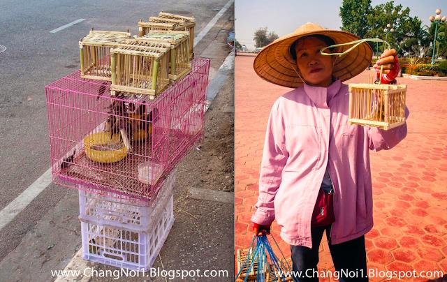 Birds in Vientiane, Laos