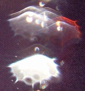 red orb veil