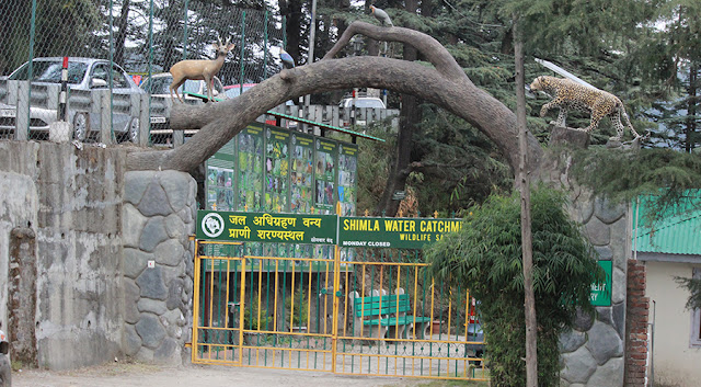 https://www.crazyshout.in/2019/05/shimla-tourism.html