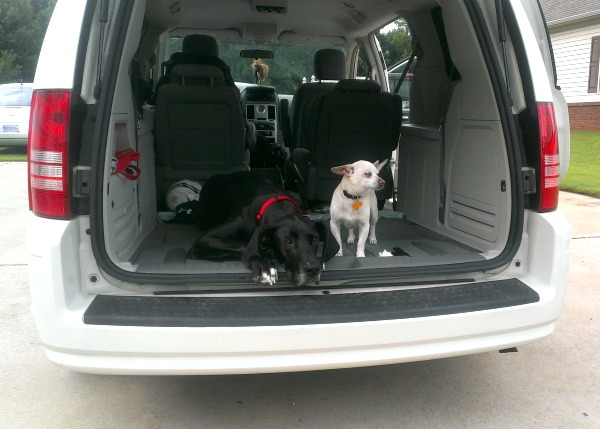 Road Trip Dogs