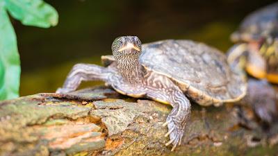 Schildkröte auf Baumstamm am sonnen by Michael Schalansky