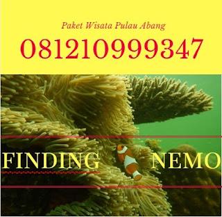 081210999347, Pulau Abang Batam, paket wisata pulau abang batam, Batam Snorkeling Tour, pulau abang snorkeling, Diving Snorkeling Tour, biaya ke pulau abang batam