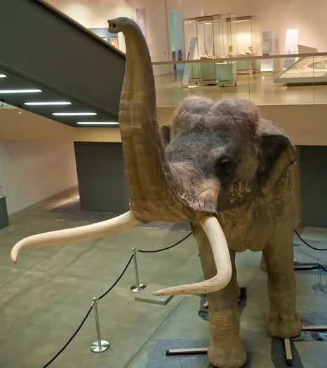 An insight into Europe's extinct giant elephants