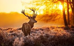 Manfaat Matahari Bagi Hewan