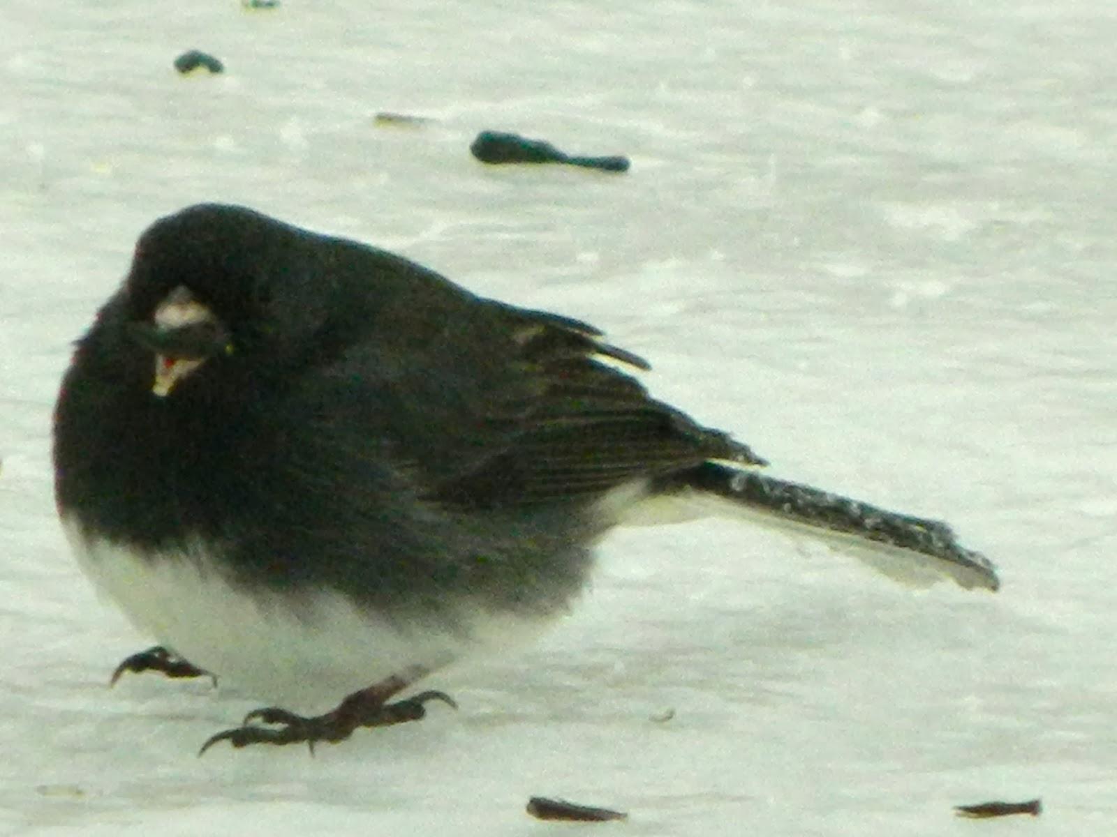 Pam S English Cottage Garden Eleven Winter Birds Of
