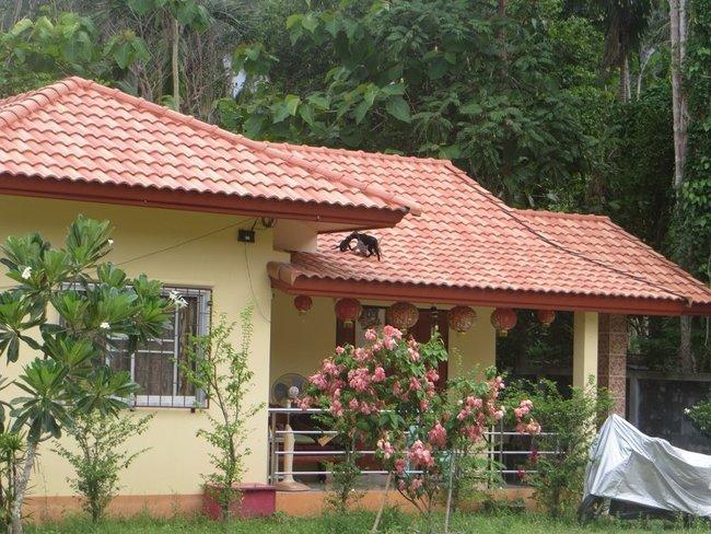 Кошка с котятами на крыше дома