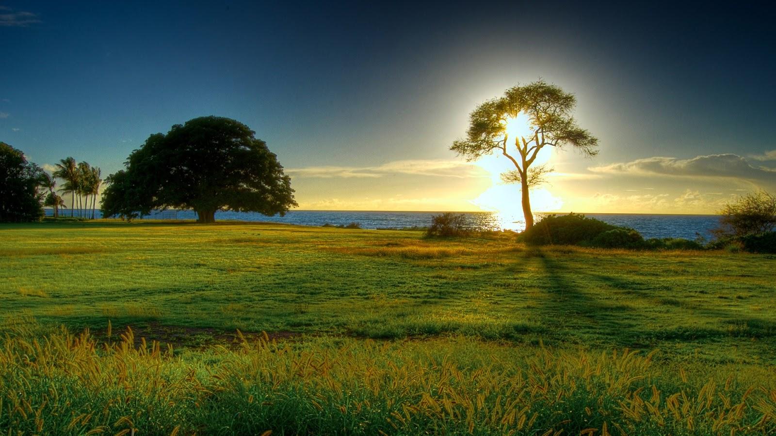 Nature Hintergrundbilder Hd