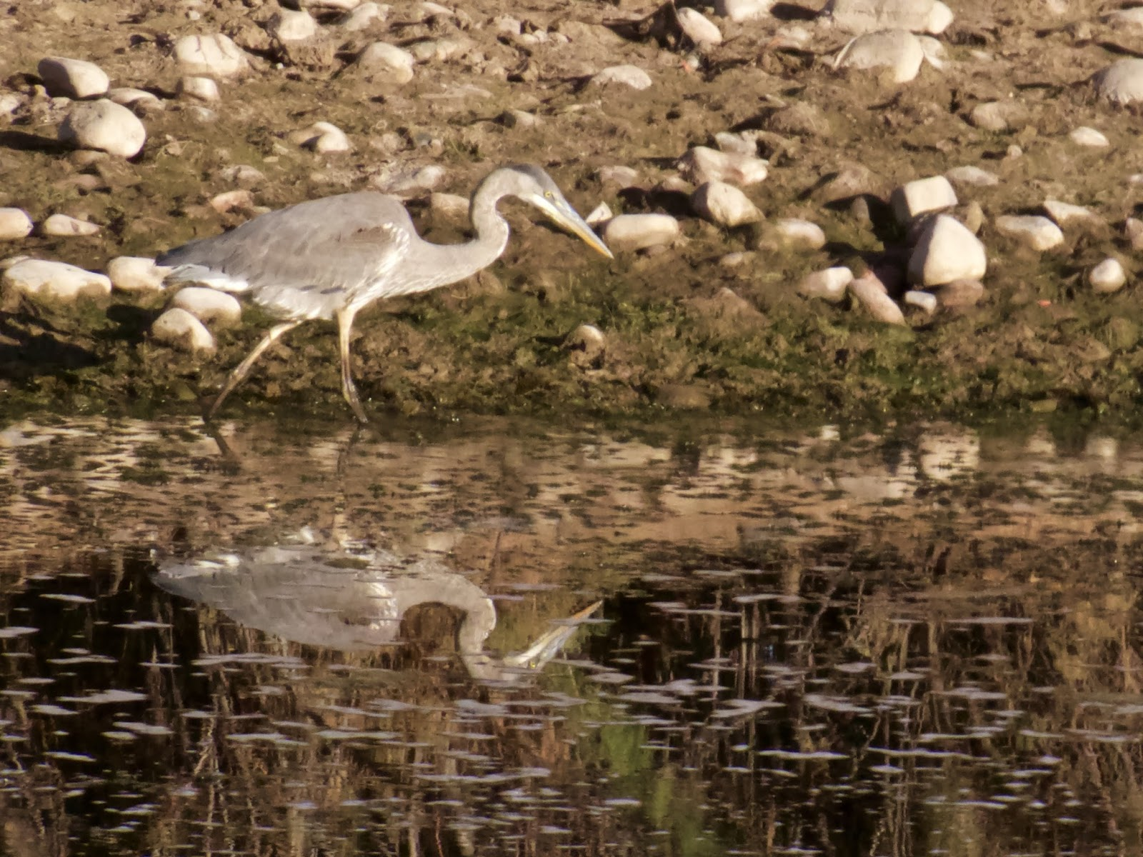 Babs 39 birding experiences coon bluff rec area along for Lower salt river fishing