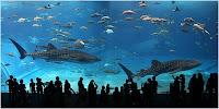 พิพิธภัณฑ์สัตว์น้ำชูราอูมิ (Okinawa Churaumi Aquarium)