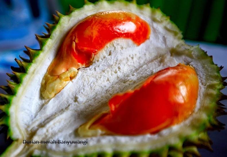 durian merah primadona banyuwangi
