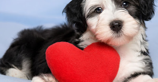 CAN DOGS FALL IN LOVE AT FIRST SIGHT ?