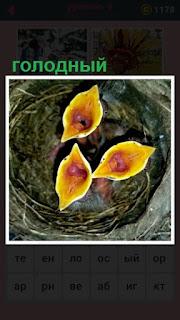 651 слов голодные рты птенцов в гнезде  8 уровень