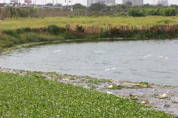 eceng gondok taman kota ria rio jakarta