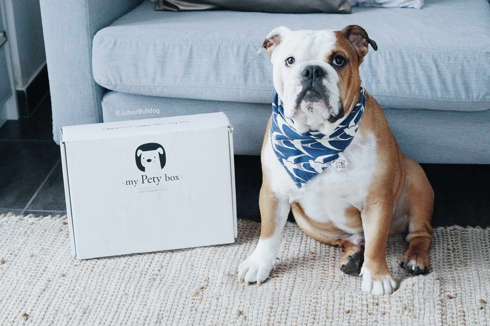My Pety Box PetyBox MyPetyBox chien animalbox petbox bulldog anglais
