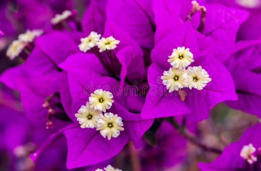 Bunga Kertas Image