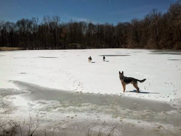 Dogs enjoying a frozen lake. - The 30 Most Amazing Photos Of Frozen Things In Honor Of The Coldest Morning Of The 21st Century
