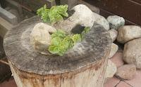 doniczka z kamienia