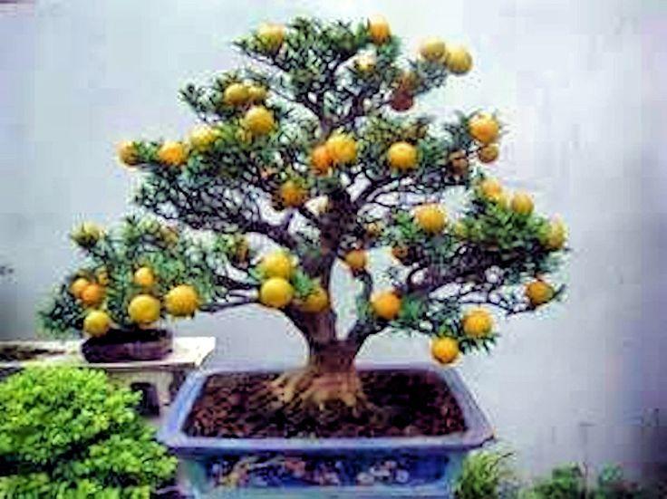 60 My Favorite Beautiful list of Trees for Bonsai [pics]