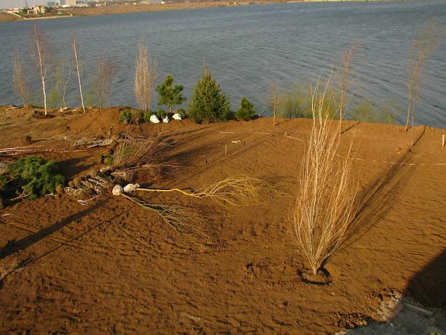 gradina peisagisti, gradina mare, lac, plantare pomi mari, sfaturi amenajare gradina, specialist in gradini, designer de gradini