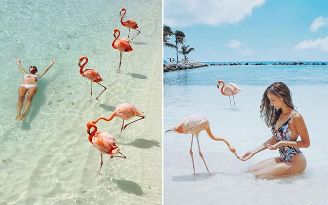 Flamingo Beach: Εκεί που άνθρωποι και φλαμίνγκο κολυμπάνε μαζί (βίντεο)