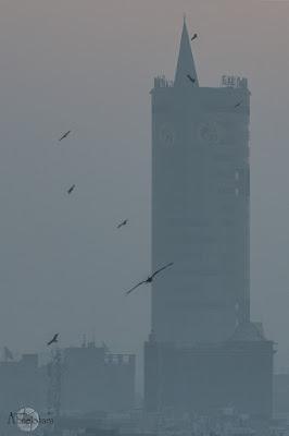 Torre-New-Delhi