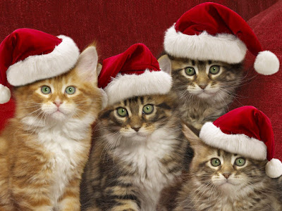 https://4.bp.blogspot.com/-S6mBmmUd8WA/XCHBR16pKZI/AAAAAAAAPwc/EY6iymMsmwsFhO92yH8NQr75QDw_sRcTQCLcBGAs/s400/Funny-Cats-Desktop-Wallpaper-For-Christmas.jpg