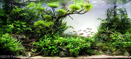 Kontes AGA 2016, Aquatic Garden, 200L ~ 320L september Gambar Aquascape
