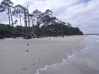 The shoreline of a beach, edged with tall trees.
