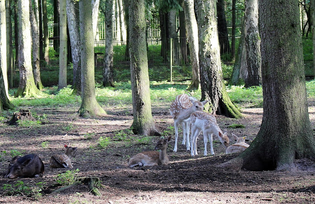 Wildtiere Gera Tierpark