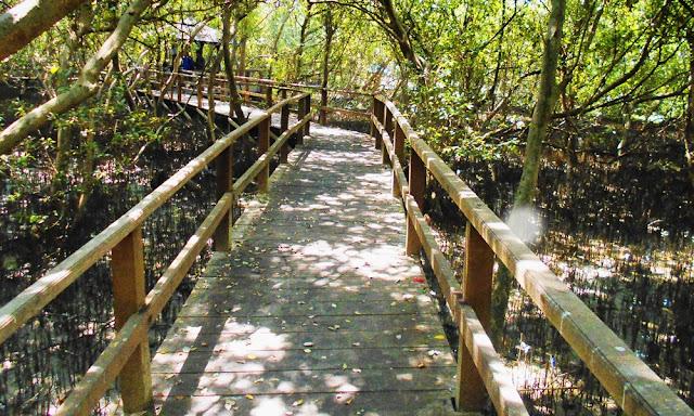 Hutan Mangrove, Sayung | Demak