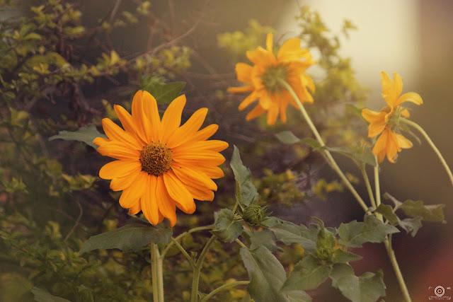 Where Flowers Bloom so does Hope, Shashank mittal photography, Shashank mittal, photography, Shashank, mittal, photography, flower, spring