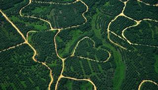 Tanah Adat Masyarakat Adat Moi: Bukan untuk Perkebunan Kelapa Sawit