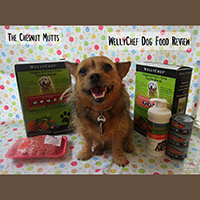wellychef dog food review