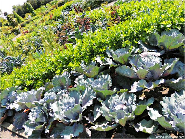 Vegetales del Useful Plants Garden en el Jardín Botánico de Montreal