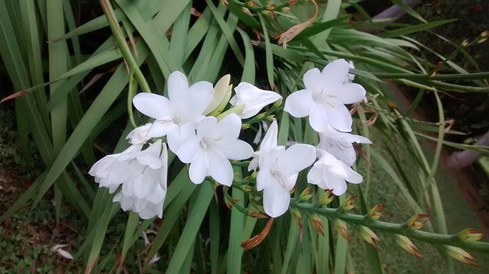 as-flores-onde-vivo-blog-vic-israel