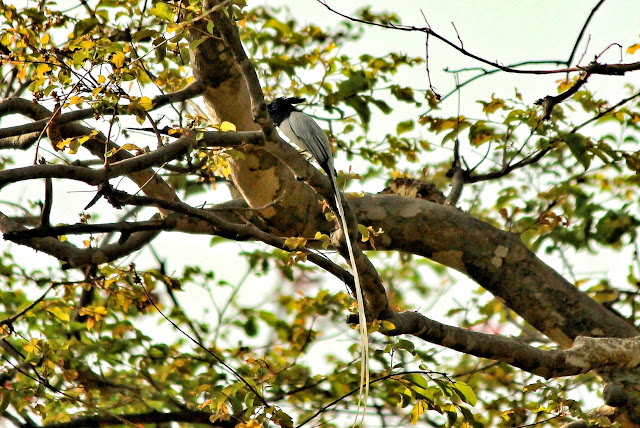 Wildlife spotting in Bandhavgarh National Park Madhya Pradesh